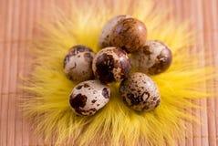 Ovos da páscoa no ninho no fundo de madeira da cor Da Páscoa vida ainda com flores, ninho, penas e ovos Imagem de Stock Royalty Free