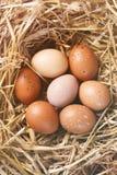 Ovos da páscoa no ninho, matizado Imagens de Stock Royalty Free