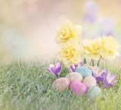 Ovos da páscoa no prado com flor do narciso amarelo Imagens de Stock