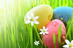 Ovos da páscoa pintados em uma grama verde em um prado e em flores Foto de Stock Royalty Free