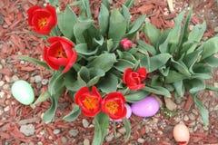 Ovos da páscoa e tulipas Imagens de Stock