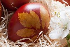 Ovos da páscoa tingidos com cascas da cebola, com um teste padrão de ervas frescas Imagem de Stock Royalty Free