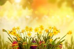 Ovos da páscoa que escondem na grama com narciso amarelo Foto de Stock