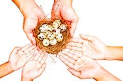 Ovos da terra arrendada da mão Foto de Stock