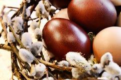 Ovos das aves domésticas em um pássaro-ninho Fotos de Stock