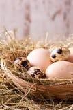 Ovos das codorniz e de galinha no ninho da palha Imagens de Stock Royalty Free