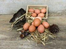 Ovos de Brown Imagens de Stock Royalty Free