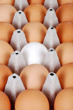 Ovos de Brown com o um ovo branco Imagens de Stock Royalty Free