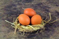 Ovos de Brown em ovos de galinha do ninho Fotos de Stock Royalty Free