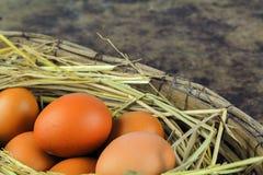 Ovos de Brown em ovos de galinha do ninho Foto de Stock Royalty Free
