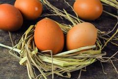Ovos de Brown em ovos de galinha do ninho Imagens de Stock