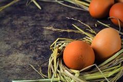 Ovos de Brown em ovos de galinha do ninho Imagens de Stock Royalty Free