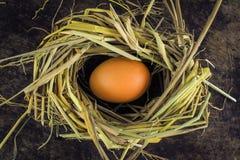 Ovos de Brown em ovos de galinha do ninho Fotografia de Stock