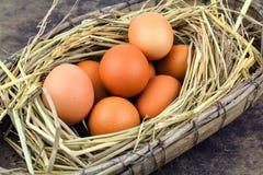 Ovos de Brown em ovos de galinha do ninho Fotografia de Stock Royalty Free