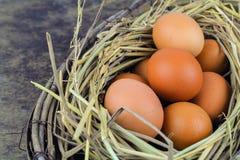 Ovos de Brown em ovos de galinha do ninho Imagem de Stock Royalty Free