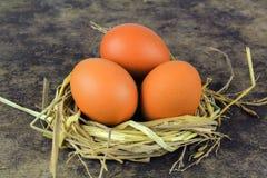 Ovos de Brown em ovos de galinha do ninho Foto de Stock