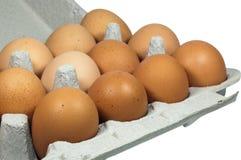 Ovos de Brown embalados junto no suporte do cartão Foto de Stock
