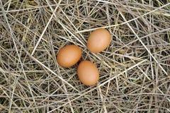 Ovos de Brown na bacia de madeira Fotografia de Stock