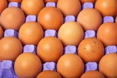 Ovos de Brown na bandeja de papel Imagem de Stock
