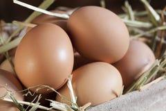 Ovos de Brown na palha Imagem de Stock