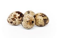 Ovos de codorniz imagem de stock