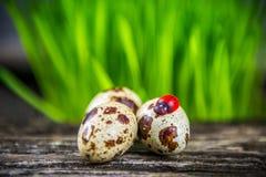 Ovos de codorniz Fotos de Stock Royalty Free