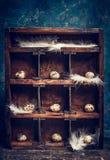 Ovos de codorniz com as penas em prateleiras na caixa de madeira do vintage Fotos de Stock