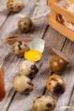 Ovos de codorniz com pena Foto de Stock Royalty Free