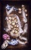 Ovos de codorniz com penas e flores dos jacintos na caixa de madeira do vintage, vista superior Foto de Stock Royalty Free
