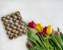 Ovos de codorniz da Páscoa frescos e tulipas coloridas em um fundo claro foto de stock royalty free