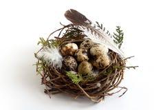 Ovos de codorniz da Páscoa no ninho com pássaros da pena imagens de stock