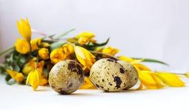 Ovos de codorniz e tulipas amarelas Fotos de Stock