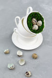 Ovos de codorniz em um copo em um fundo concreto Fotos de Stock