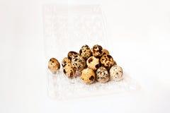 Ovos de codorniz em um recipiente plástico transparente Fotos de Stock Royalty Free