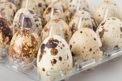 Ovos de codorniz em um recipiente plástico transparente no branco Imagem de Stock