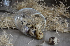 Ovos de codorniz em um vidro Fotos de Stock