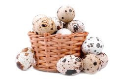 Ovos de codorniz em uma cesta de vime pequena Em um fundo branco Isolado imagem de stock royalty free