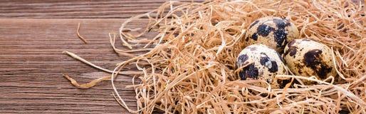 Ovos de codorniz em uma pilha da palha Fotografia de Stock