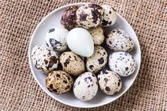 Ovos de codorniz frescos imagem de stock
