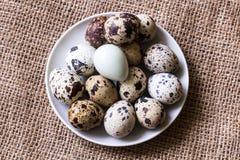 Ovos de codorniz frescos imagem de stock royalty free