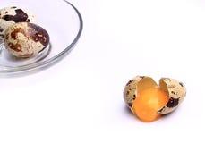 Ovos de codorniz, isolados no fundo branco Imagens de Stock