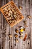 Ovos de codorniz na caixa Fotos de Stock