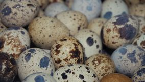 Ovos de codorniz na exploração avícola video estoque