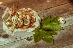 Ovos de codorniz na tabela de madeira Fotos de Stock Royalty Free