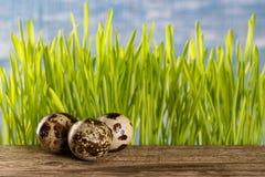 Ovos de codorniz na tabela de madeira com uma grama verde fotos de stock
