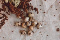 Ovos de codorniz no despedida Fotos de Stock Royalty Free