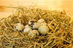 Ovos de codorniz no feno Fotografia de Stock