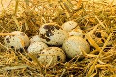 Ovos de codorniz no feno Fotografia de Stock Royalty Free