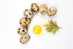 Ovos de codorniz no fundo branco em torno dos ovos fritos Imagem de Stock Royalty Free