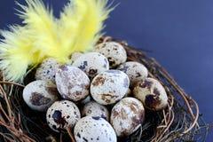Ovos de codorniz no ninho Foto de Stock Royalty Free